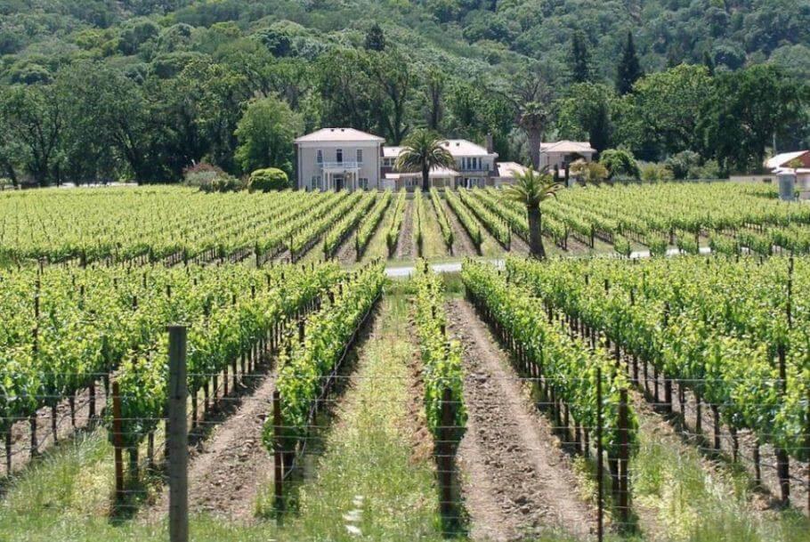 El cultivo de viñedos es también popular en los valles y colinas del Triángulo Esmeralda
