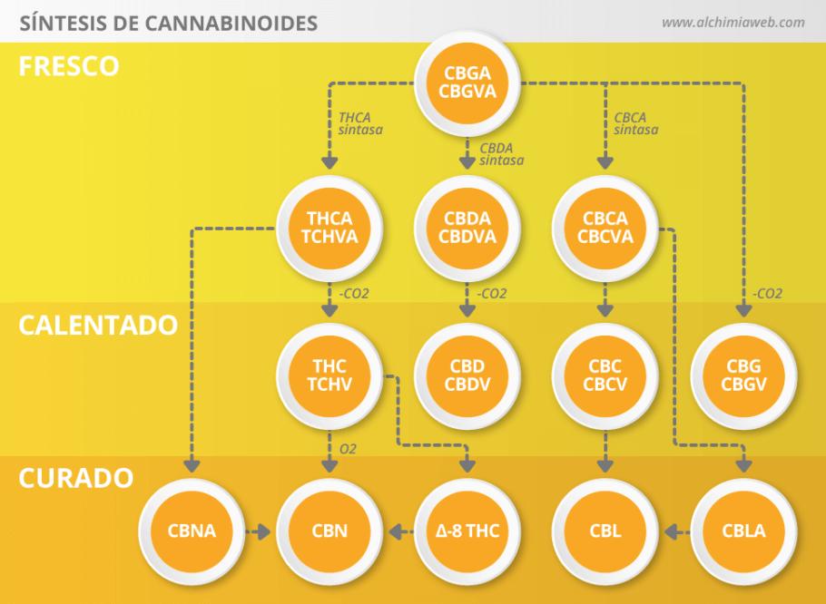 Síntesis de cannabinoides a partir de CBGA