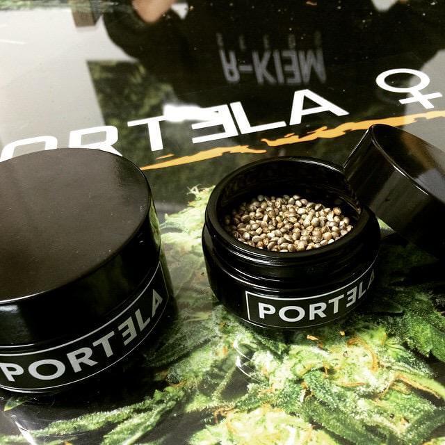 Portela puede encontrarse en forma de semillas feminizadas