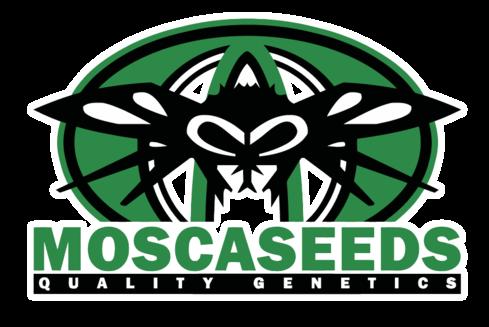 Variedades de Mosca Seeds