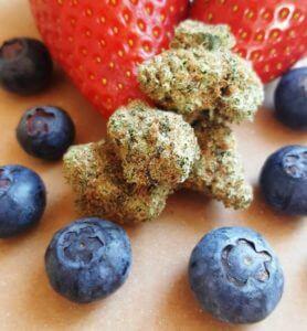 Un híbrido OG Kush x Blueberry con aromas a frutos rojos