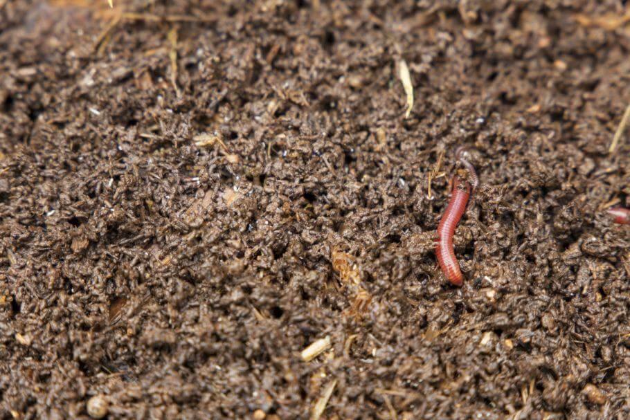 La microvida del suelo descompone materia orgánica convirtiéndola en nutrientes asimilables por la planta