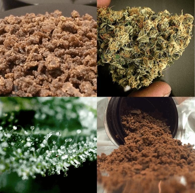 Negra 44 de R-Kiem Seeds: producción, rapidez y calidad