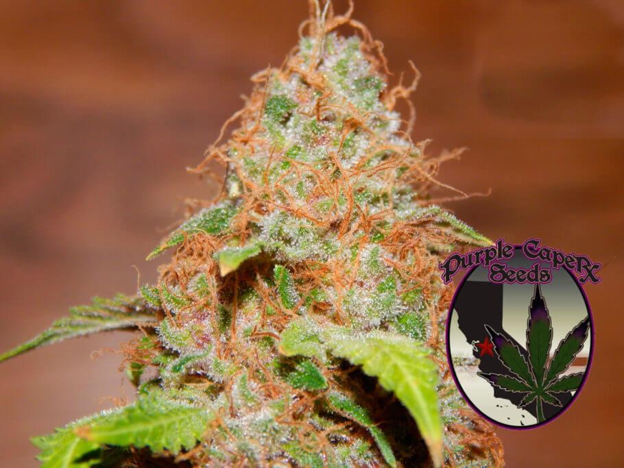 Zkitlles de Purple Caper Seeds
