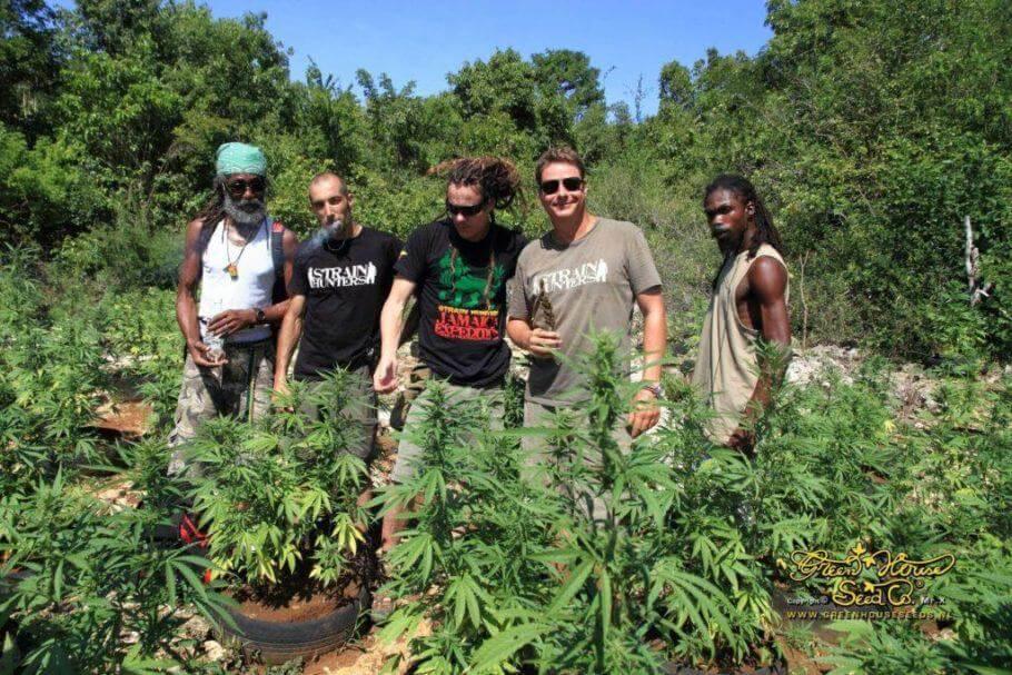 Strain Hunters visitando un cultivo de marihuana en Jamaica