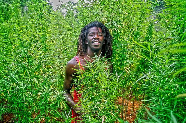 Jamaica y el Cannabis