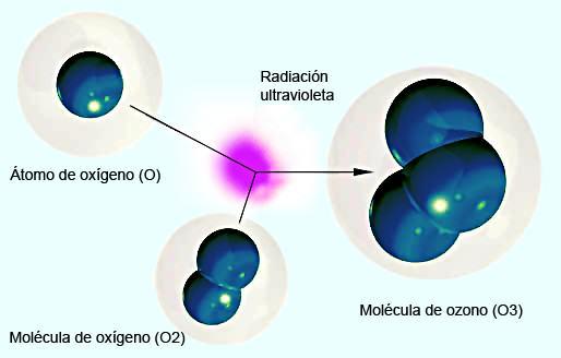 La molécula del ozono (O3) está compuesta por tres átomos de oxígeno (O2) formada al disociarse los dos átomos que componen el oxígeno.