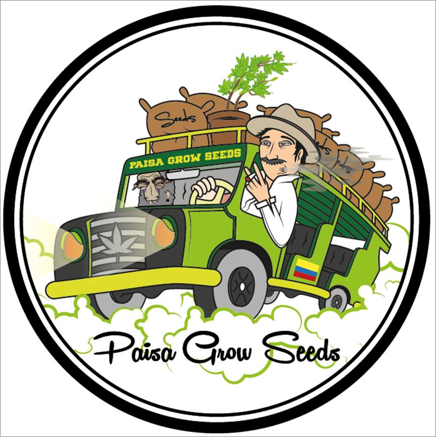 paisa-grow-seeds-dinamismo-pasion-marihuana