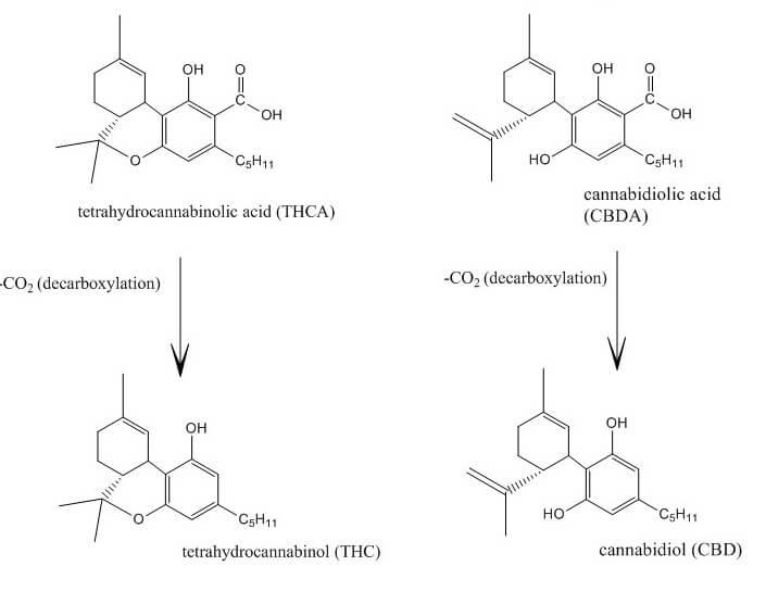 Dos cannabinoides en forma ácida - THCA y CBDA - se descarboxilan perdiendo una molécula de CO2