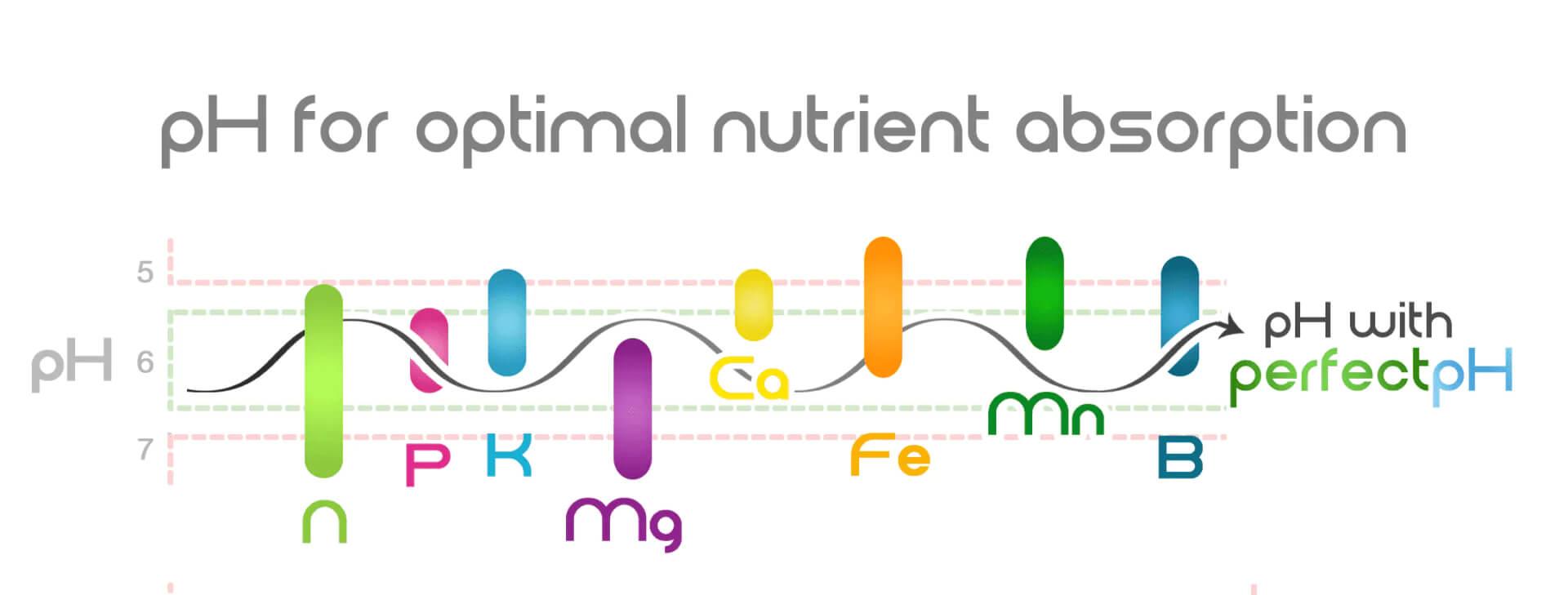El pH y los nutrientes en el cannabis