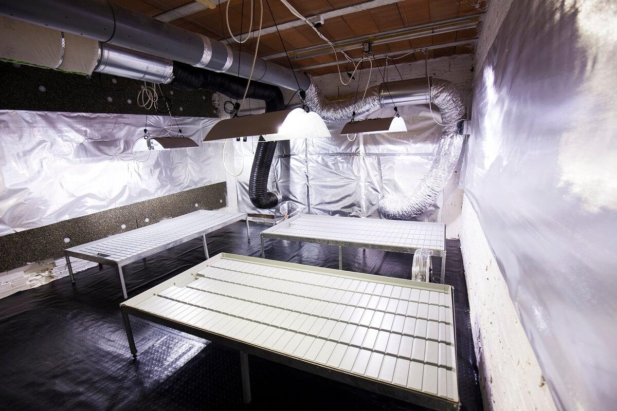 limpieza-sala-cultivo