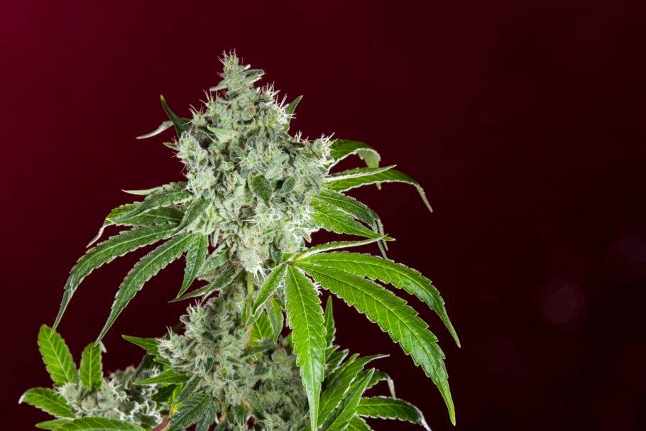 El sabor y aroma de una planta le otorgan gran parte de su personalidad
