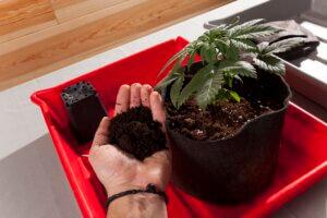 Colocamos la planta en el hueco y rellenamos la maceta
