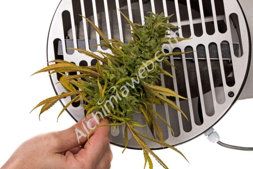 Trimadoras: ¿Qué máquina para pelar marihuana elegir?