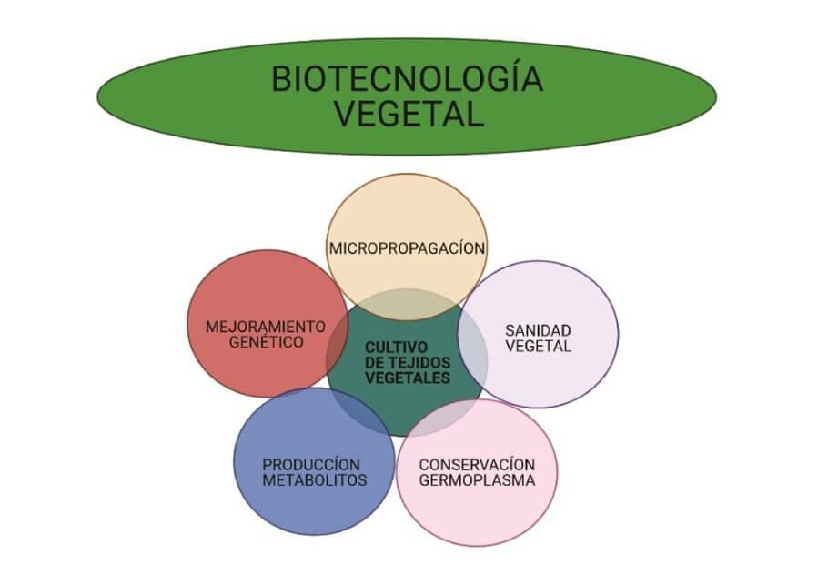 Usos y aplicaciones de la biotecnología vegetal
