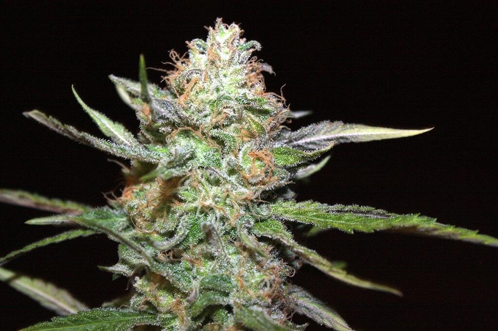 sistemas-cultivo-cannabis
