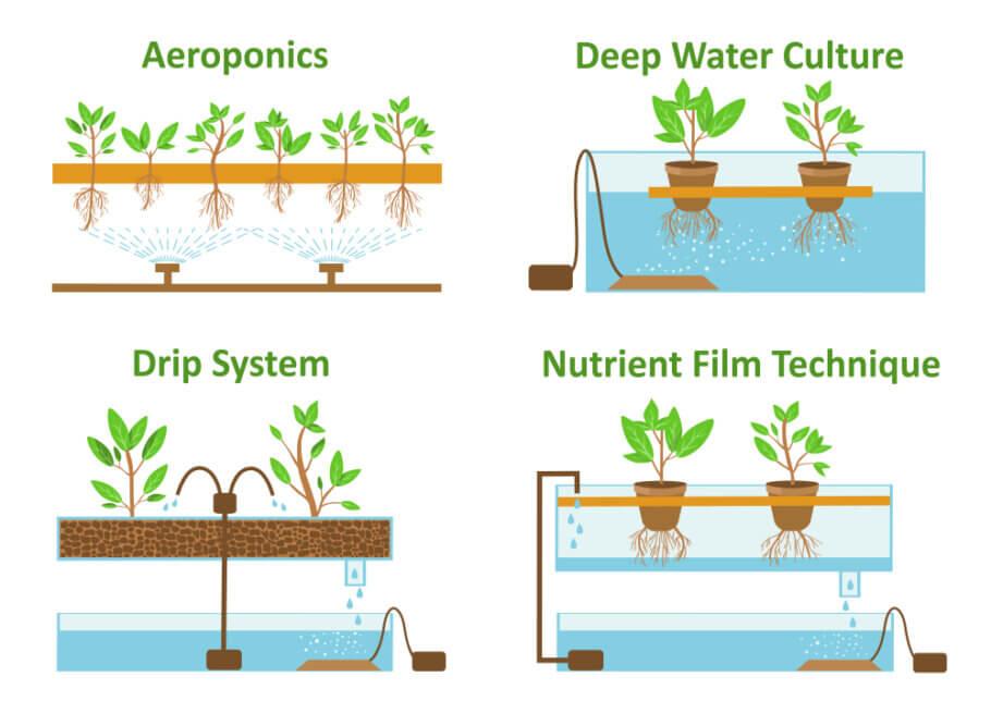 Sistemas de cultivo: aeropónico, DWC, por goteo y NFT