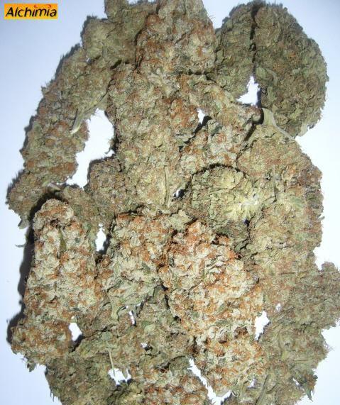 Marihuana manicurada