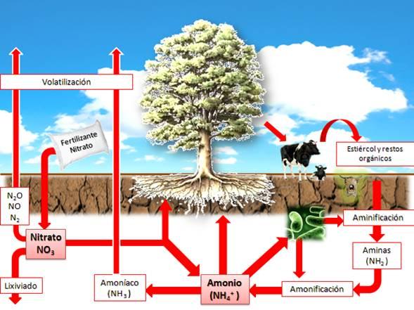 Processos del nitrogen