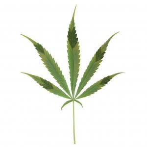 Carències i Excessos de Fòsfor en la Marihuana