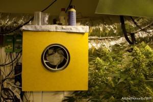 Caixó insonoritzat per al cultiu de marihuana
