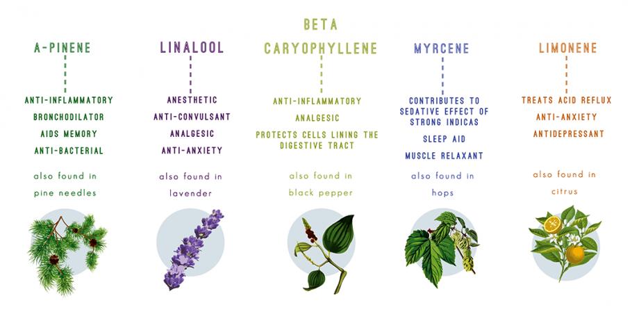 Terpens i cànnabis