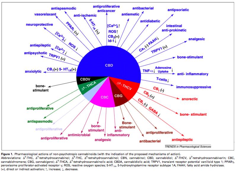El CBD té nombrosos efectes beneficiosos per al cos humà