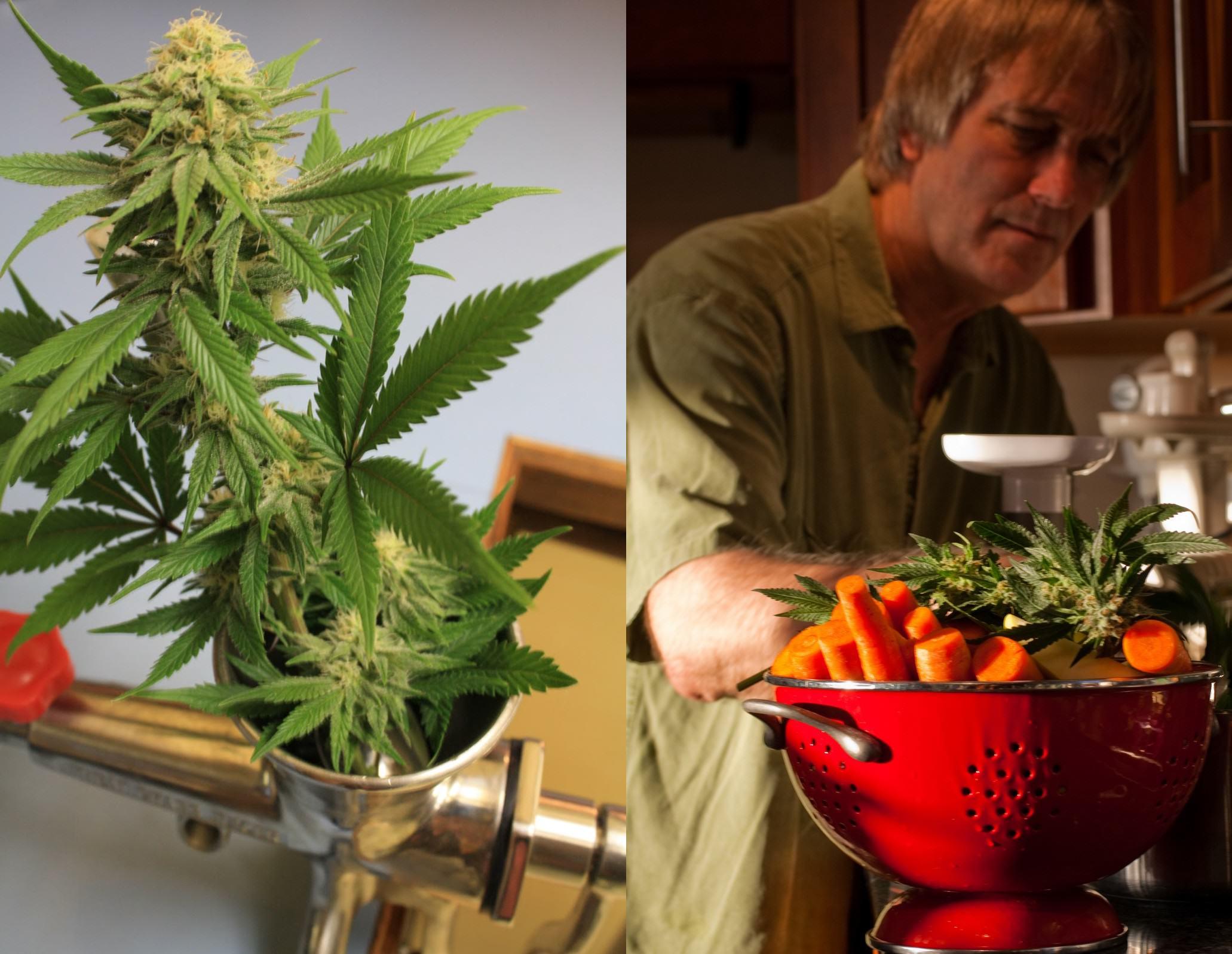És aconsellable diluir el suc de marihuana amb diferents fruites per tal de diluir la seva forta gust vegetal