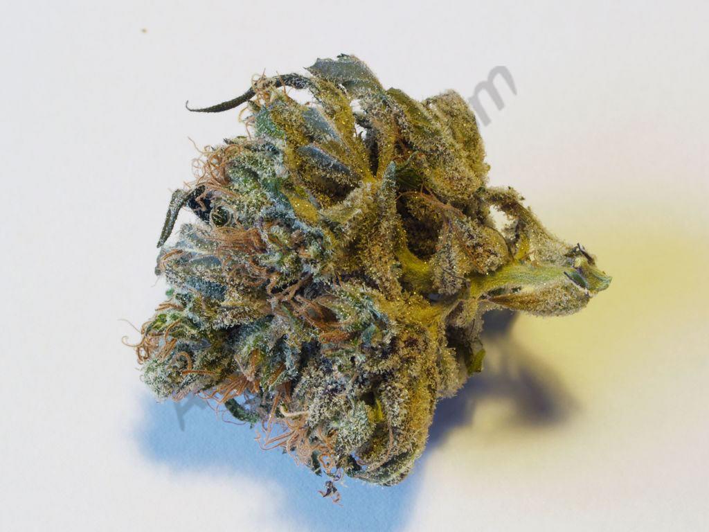 Introducció al tast de la Marihuana