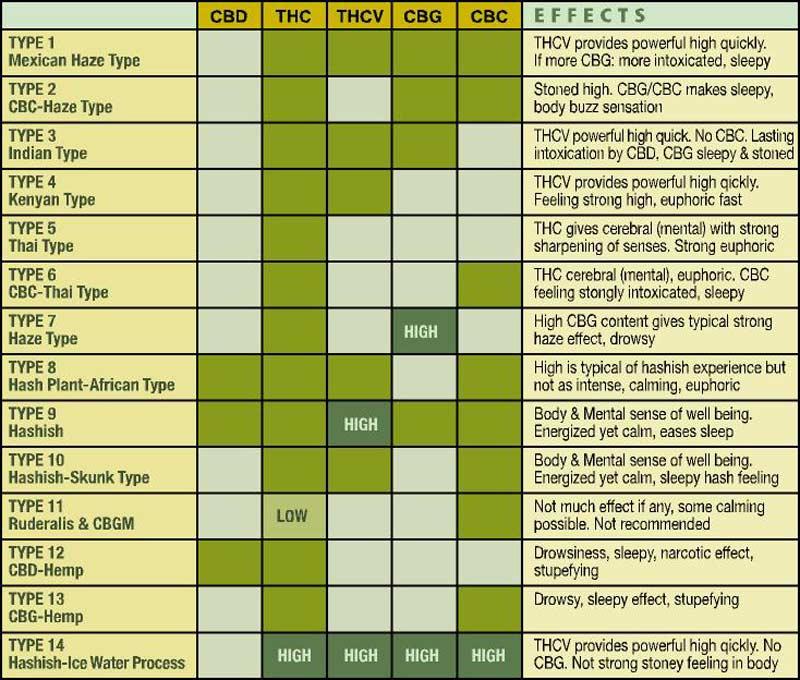 Quimiotipus de la marihuana