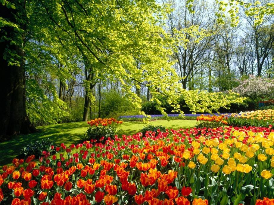 Jardí amb flors d'alegres colors
