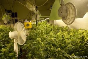 La ventilació en el cultiu de marihuana