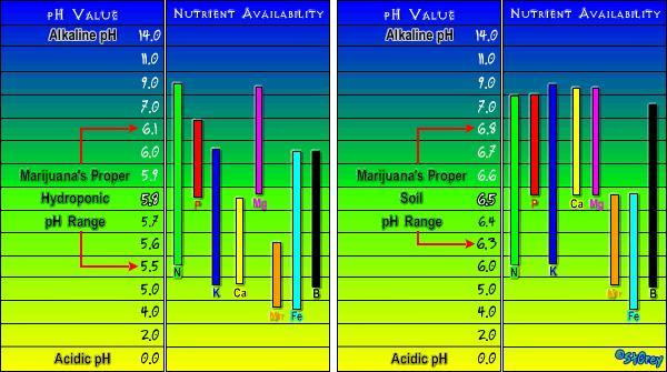 El PH i la marihuana