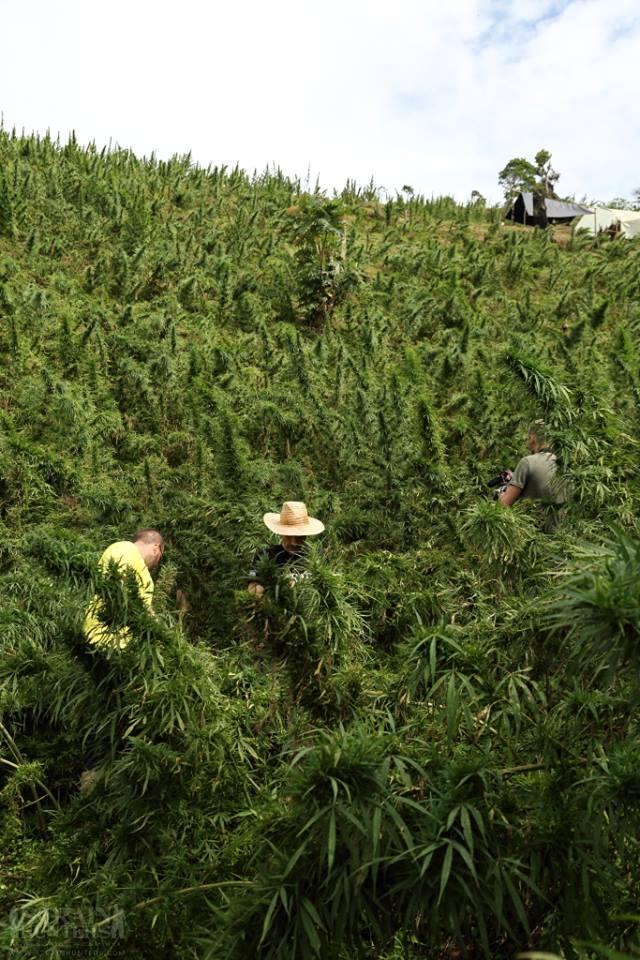 Strain Hunters Seedbank: llavors de marihuana del món