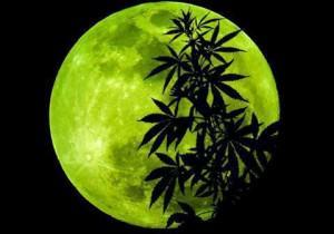 Influència de la Lluna en el cultiu de Marihuana