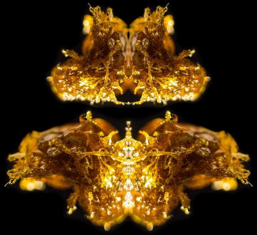 Flikr - Andres Rodriguez - Oli de marihuana