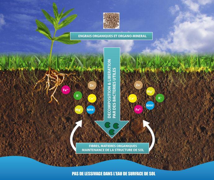 El nutrient és el menjar de les plantes
