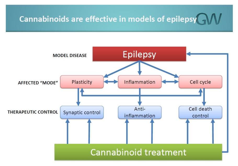 GW Pharmaceuticals estudia l'acció dels cannabinoides contra l'epilèpsia