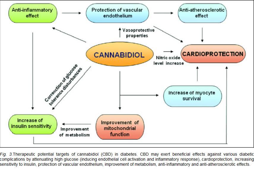 Acció del CBD contra la diabetis