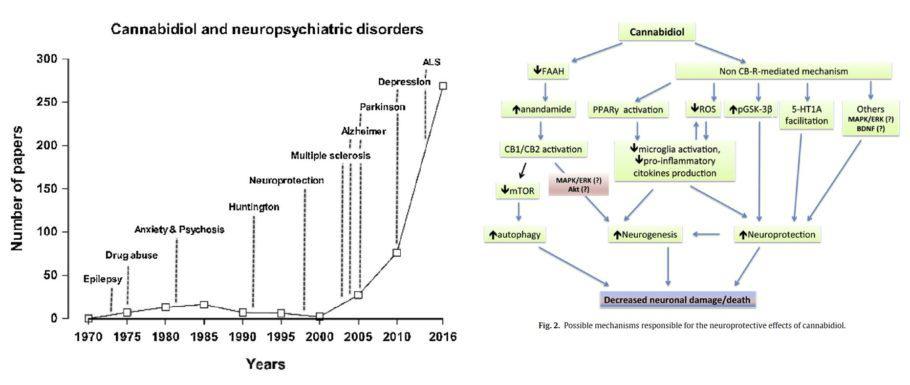 CBD contra las afeccions neurològiques
