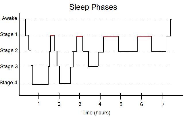 En aquest diagrama veiem que les diferents fases es van alternant