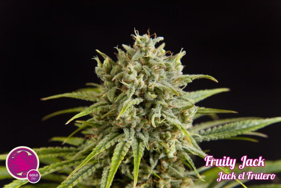 Jack el Frutero / Fruity Jack