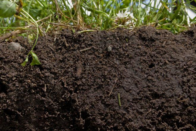 Les plantes necessiten un sòl viu i ric per desenvolupar-se correctament (Foto: NRCS)
