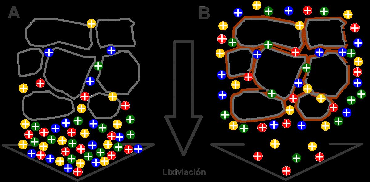 Efectes del rentat d'arrels. Figura A: Els nutrients surten del substrat Figura B: Els nutrients estan en format assimilable però hi ha un excés de nutrients