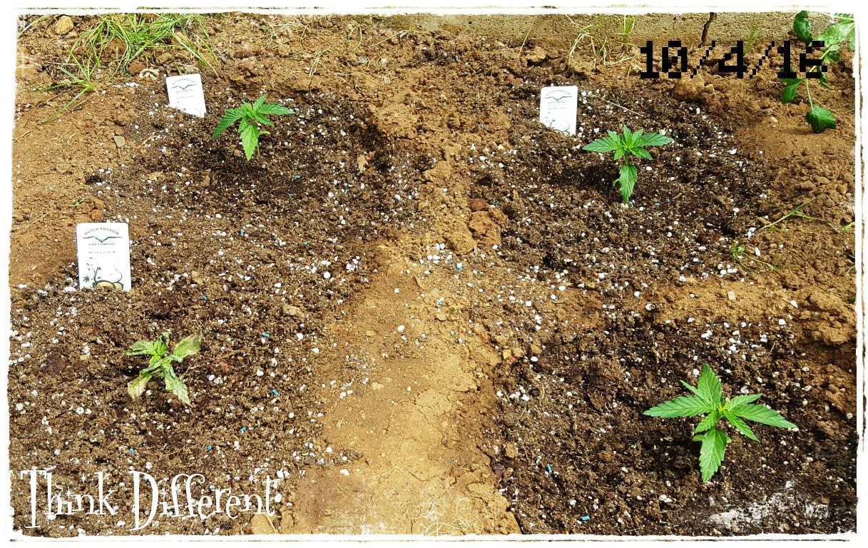 Think Different en ple sòl