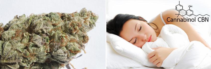 El cànnabis molt curat o ric en CBN ajuda a agafar el son
