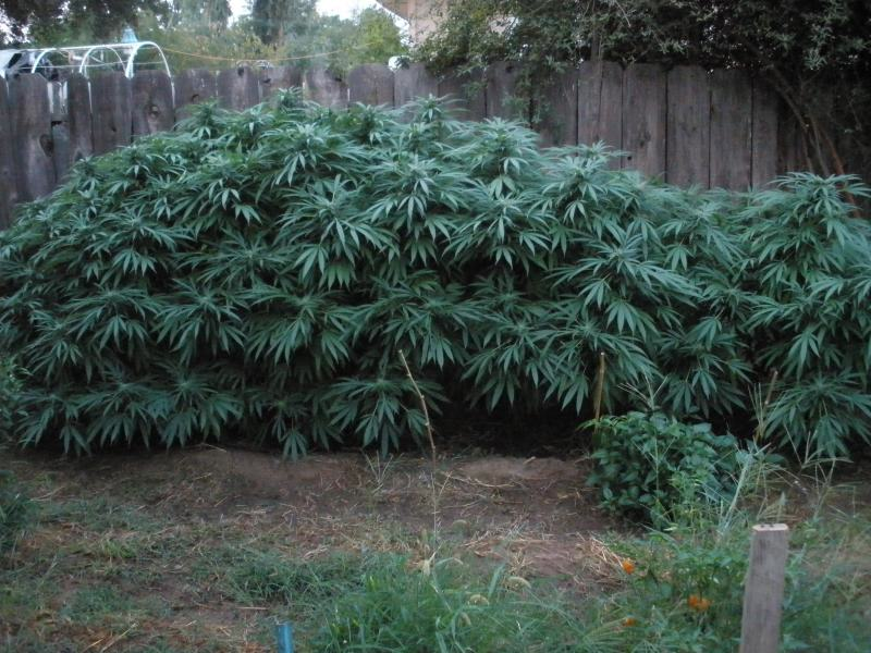 A vegades hem de controlar l'alçada de les plantes
