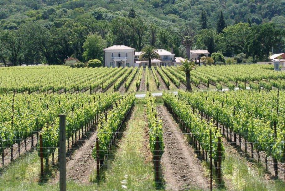 El cultiu de vinyes també és popular a les valls i turons del Triangle Esmeralda