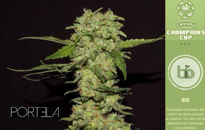 Portela va ser guardonada a la prestigiosa Cannabis Champions Cup a la Spannabis 2014