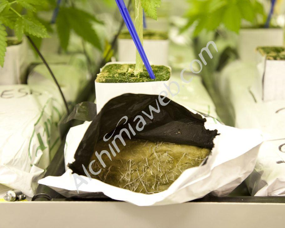Qualsevol medi de cultiu necessita de microvida per al bon desenvolupament de les plantes